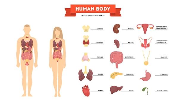 Концепция анатомии человека. женское и мужское тело Premium векторы