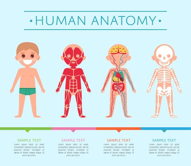 Human anatomy template with child Premium Vector