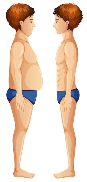 Human body fat and slim Free Vector