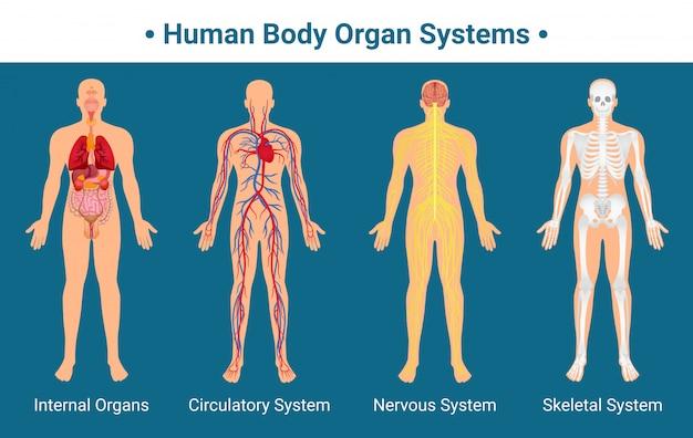 인체 장기 시스템 포스터 무료 벡터
