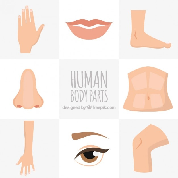 Human body parts Premium Vector