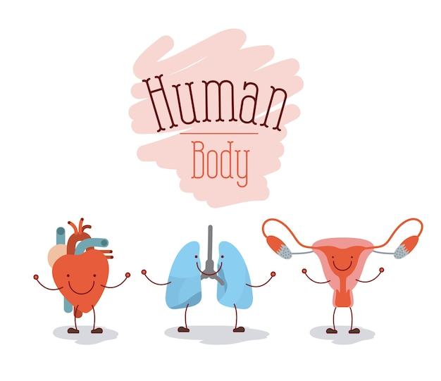 Human body systems Premium Vector