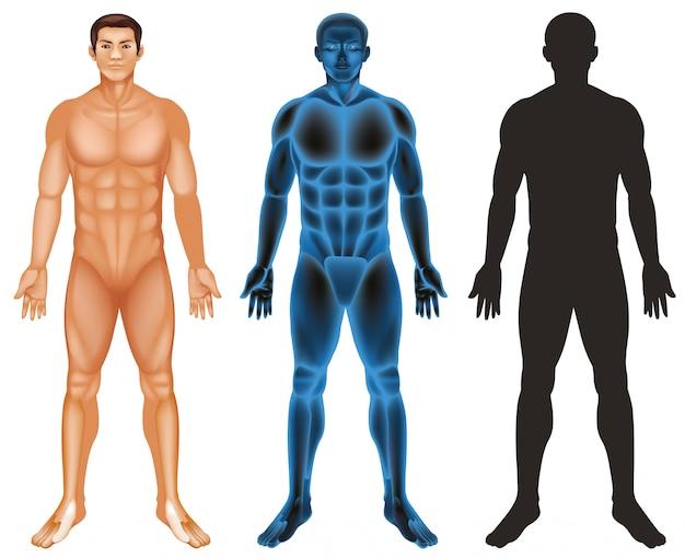 Человеческое тело Бесплатные векторы