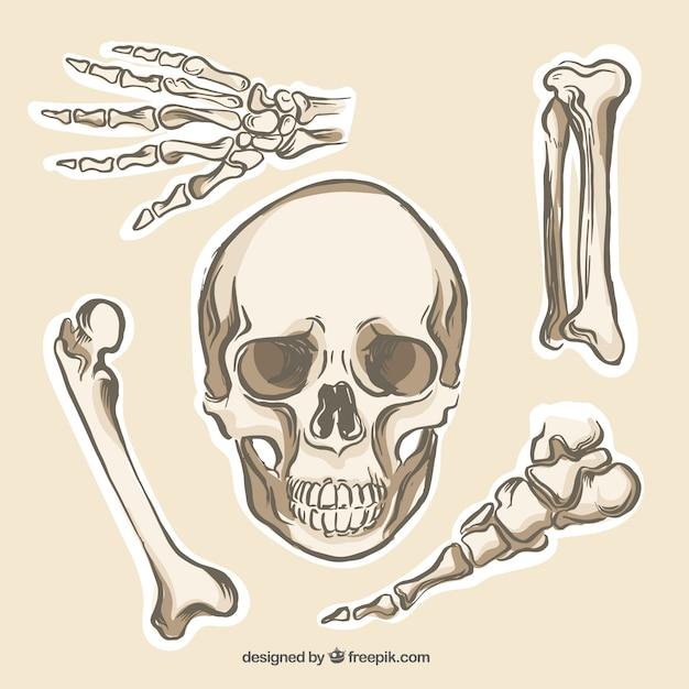 Human Bones Collection Vector Premium Download