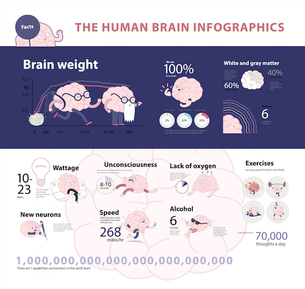 Human brain infographic set 2, cartoon vector isolated images accompanied with statistic facts and graphs Premium Vector