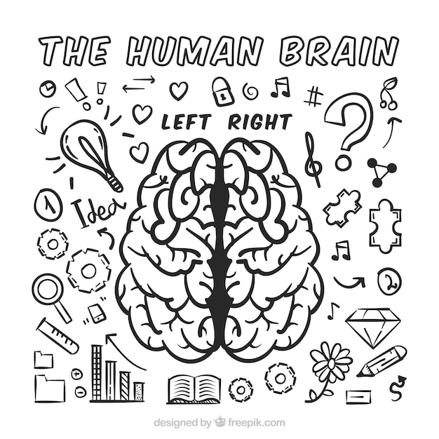 Human brain infographic with assortment of doodles Free Vector