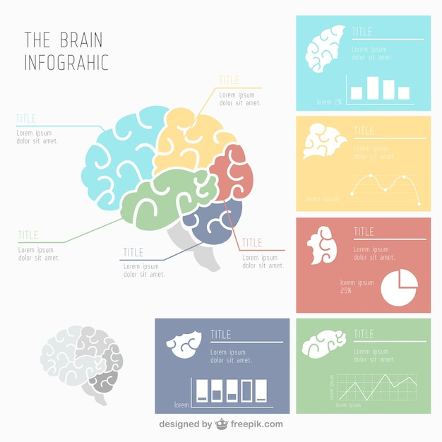 human brain infographic with several charts vector