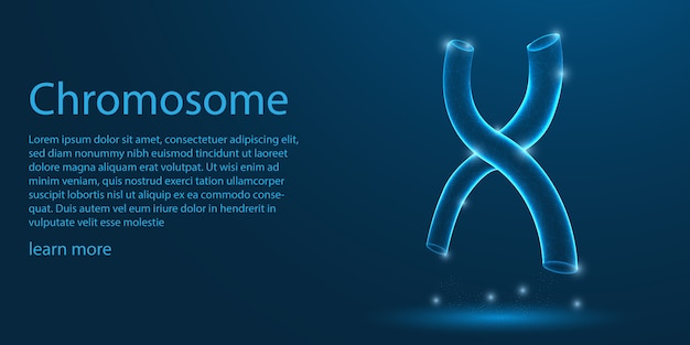 Human chromosome,  x-shaped structure. Premium Vector