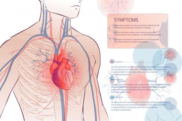 Human circulatory vascular system Premium Vector