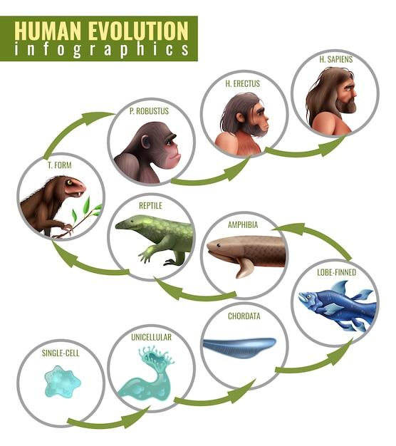 Human evolution infographics Free Vector