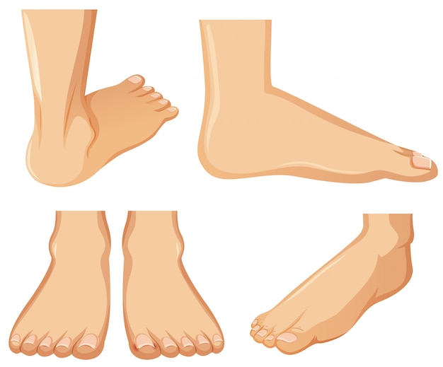 Human foot anatomy on white background Premium Vector