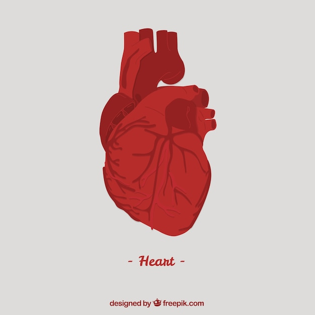 Human heart vector free download human heart free vector ccuart Images