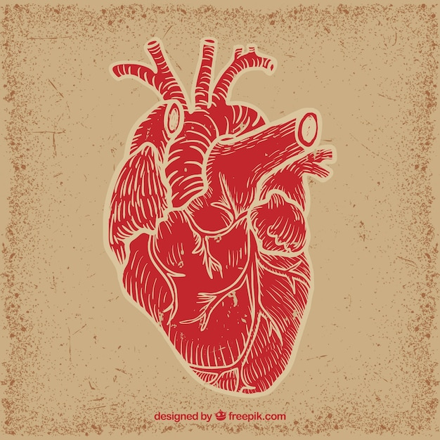 human heart vector premium download rh freepik com human heart vector icon human heart vector image
