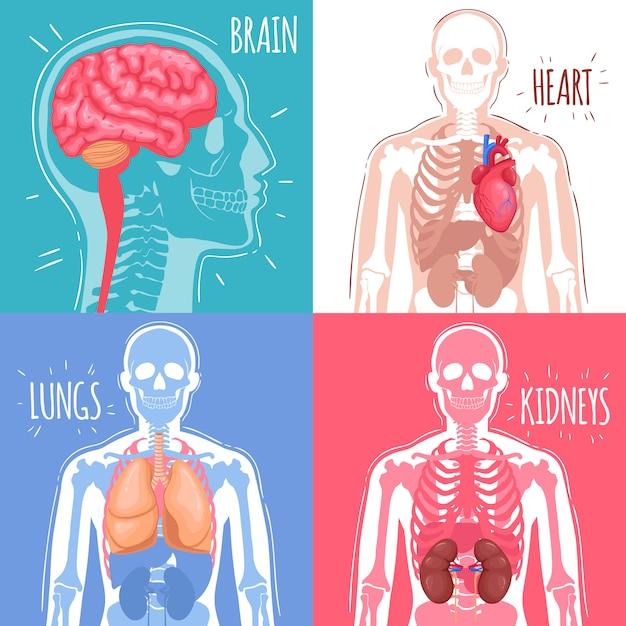 인간의 내부 장기 개념 무료 벡터
