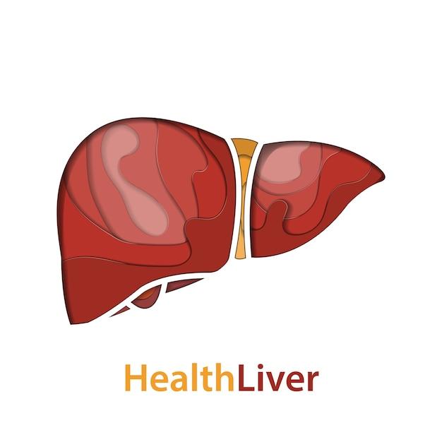 Human liver paper cut concept Premium Vector