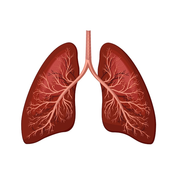 Human lungs Premium Vector