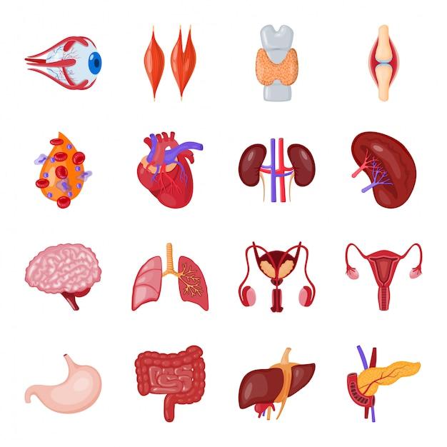 Human organ cartoon icon set Premium Vector