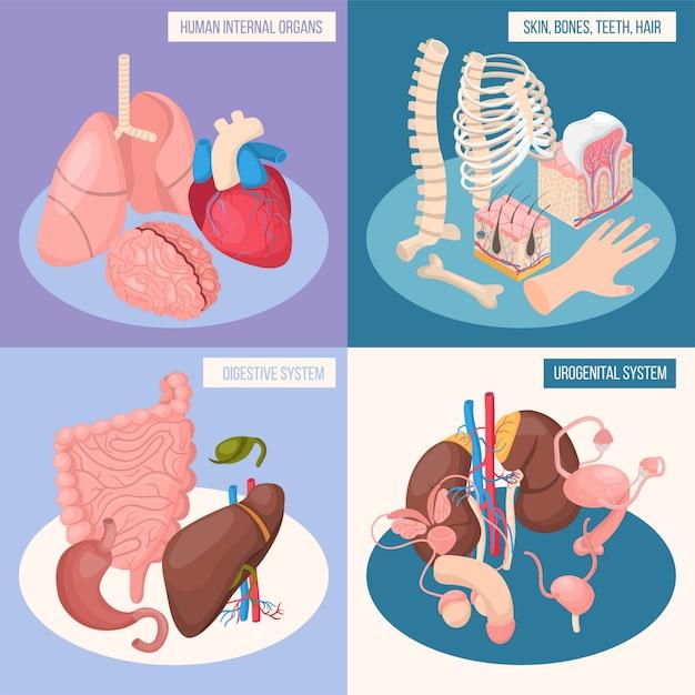 Human organs concept set of digestive and urogenital systems skin bones teeth hair isometric Free Vector