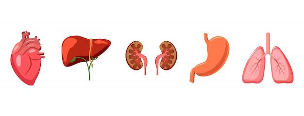 Human organs elements set. cartoon set of human organs Premium Vector