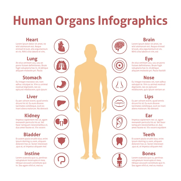 Human organs icons with male figure infographics set vector illustration Free Vector