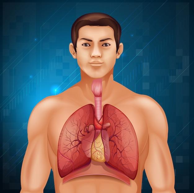 人間の呼吸器系 Premiumベクター