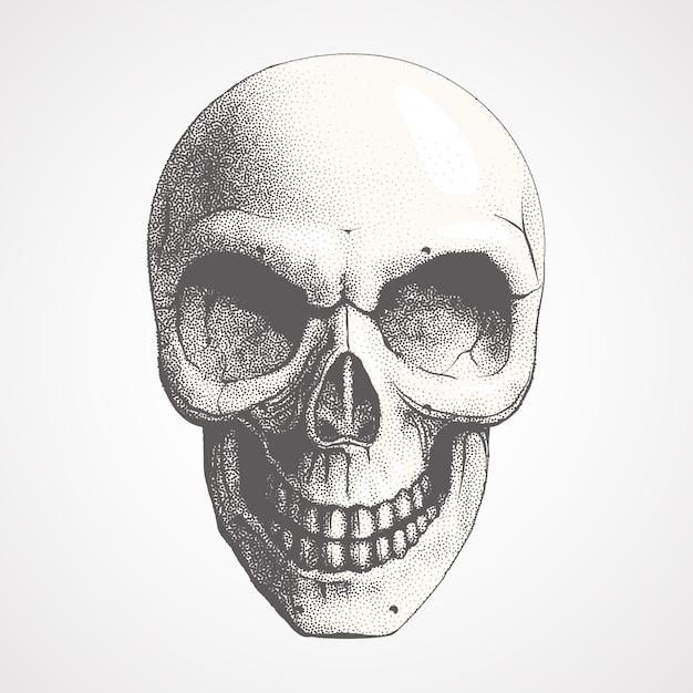 밝은 배경에 인간의 두개골 프리미엄 벡터