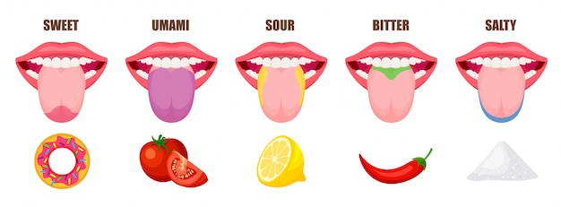 Human tongue basic taste areas. five taste zones in a mouth - sweet, salty, sour, bitter and umami. educational, schematic illustration isolated on white background. Premium Vector