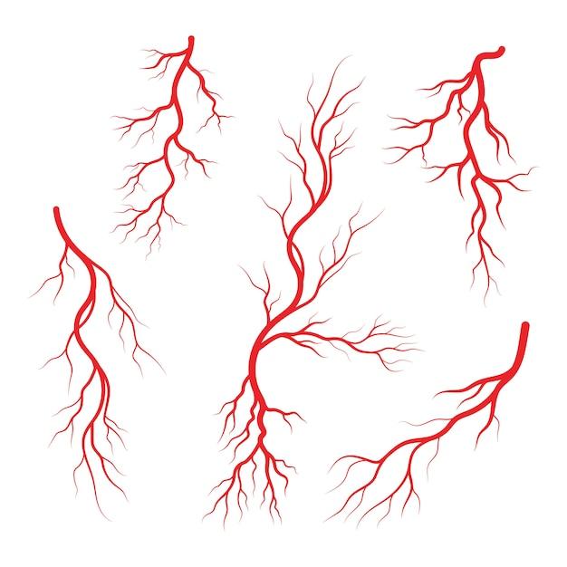 Human veins and arteries illustration Premium Vector