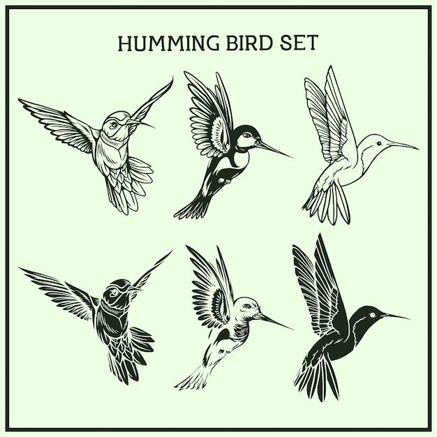 Humming bird set Premium Vector