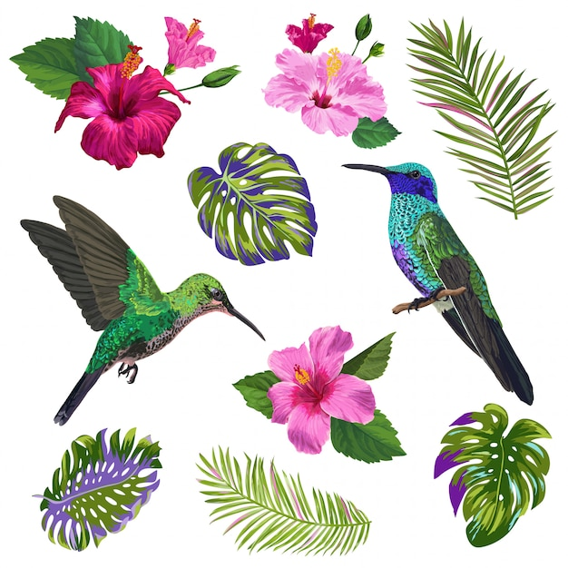Hummingbird, hibiskus flowers and tropical palm leaves Premium Vector