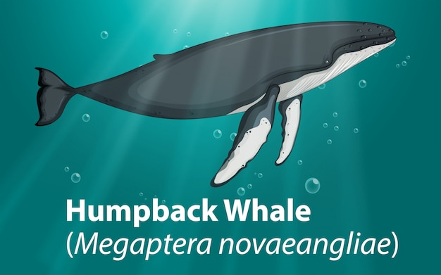 Humpback whale in deep ocean Free Vector