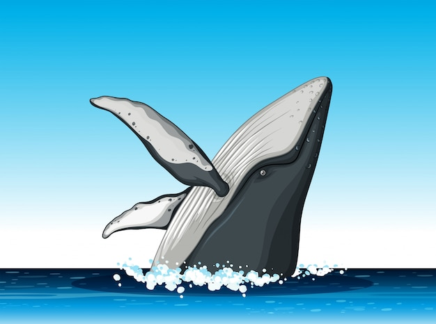Humpback whale jump out of water Premium Vector