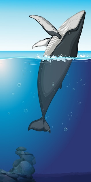 A humpback whale in the ocean Free Vector