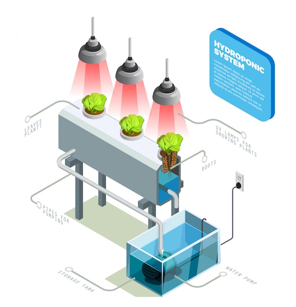 Hydroponic system infographic layout Free Vector