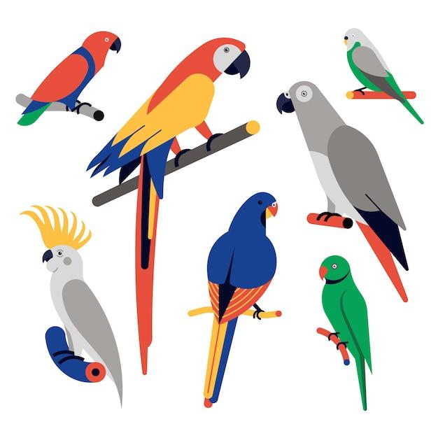 Набор иконок попугаев. попугай-эклектус, ара ара, африканский серый попугай, волнистый попугайчик, серный хохлатый какаду, кольчатый попугай. Premium векторы