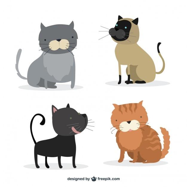 cat toy app