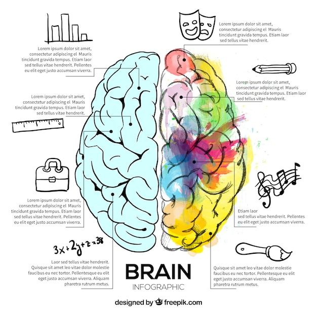 Illustration of brain with watercolor stains Premium Vector