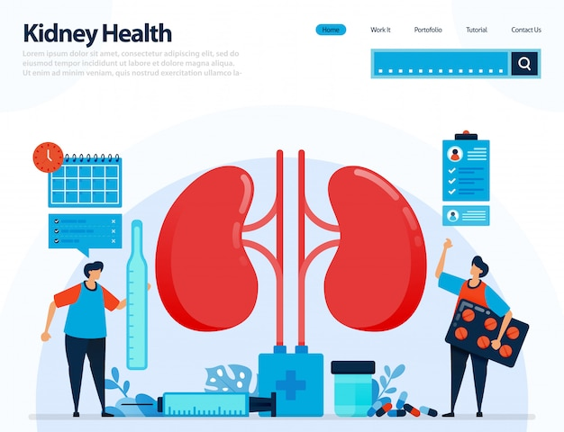 Illustration for checking kidney health. diseases and disorders of kidney. Premium Vector