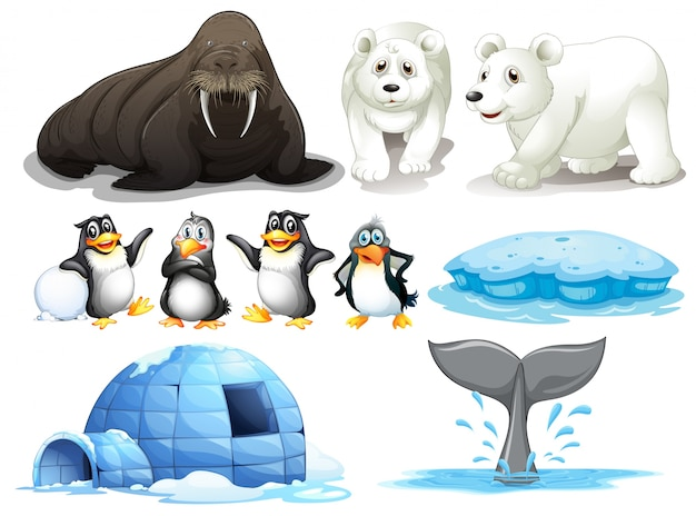 Illustration of different animals from north pole Free Vector