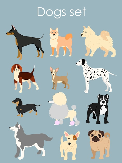 Illustration of different type of cartoon dogs. dogs set in cartoon flat style on light blue background. Premium Vector