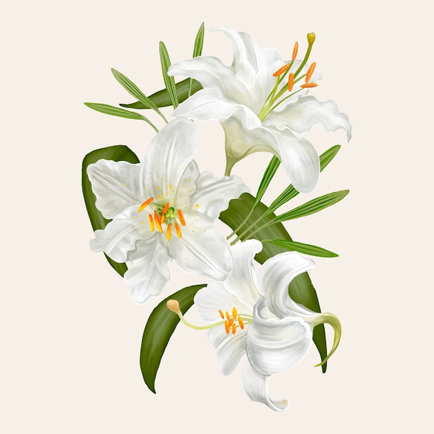 Illustration drawing of lily flowers Premium Vector