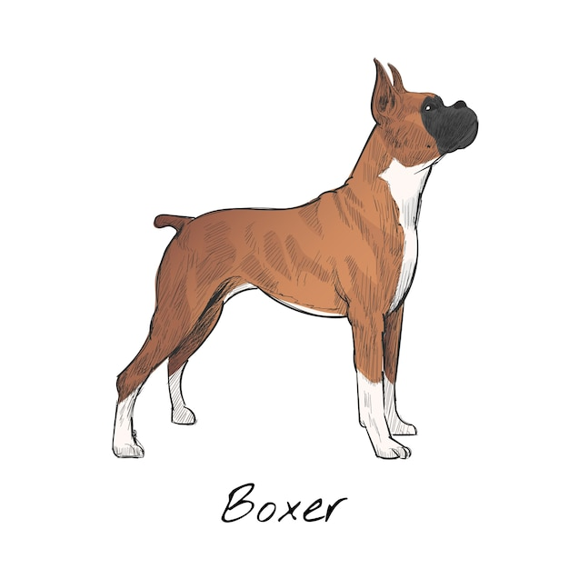 Illustration drawing style of dog Free Vector