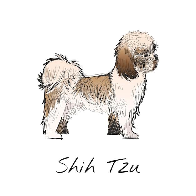 Shih Tzu Vectors Photos And Psd Files Free Download