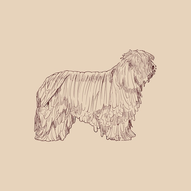 Illustration drawing style of dog Premium Vector cães gigantes