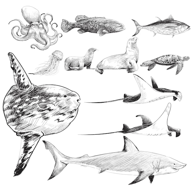 Illustration drawing style of marine life collection Free Vector