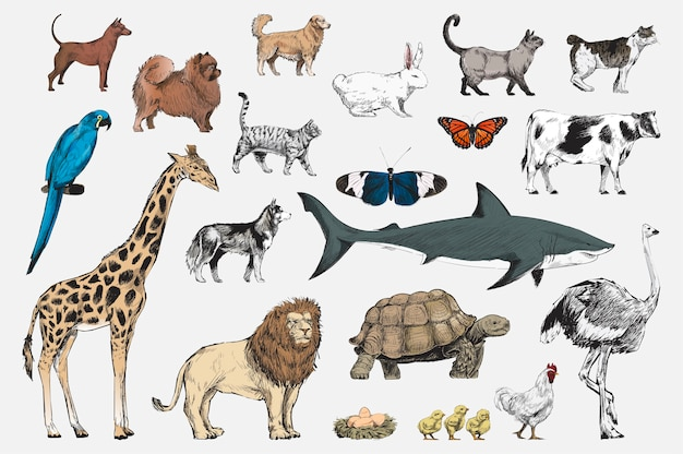 Illustration drawing style of animal\ collection