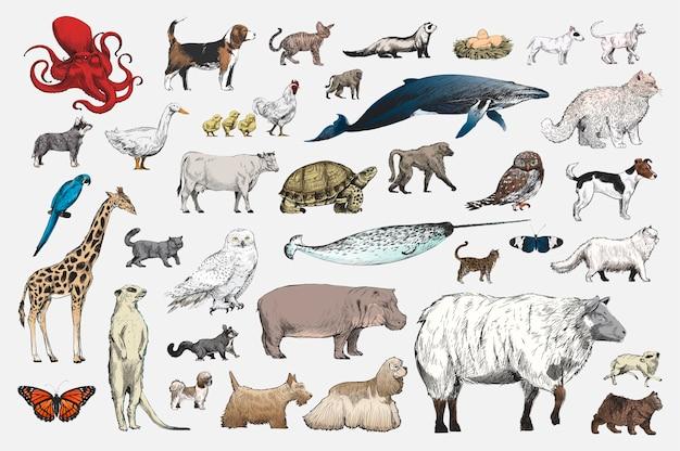 動物コレクションのイラストの描画スタイル 無料ベクター