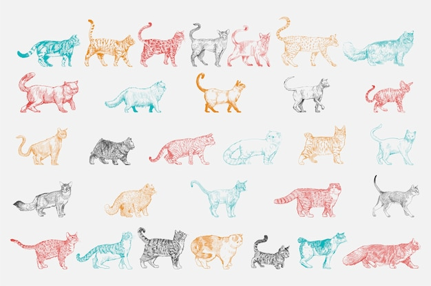 Illustration drawing style of cat breeds collection Free Vector