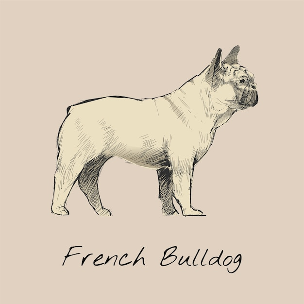 犬のイラストの描画スタイル 無料ベクター