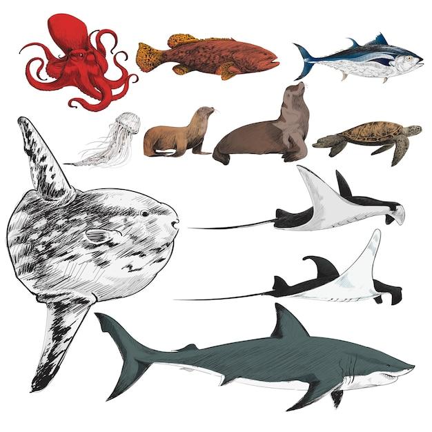 海洋生物コレクションのイラストの描画スタイル 無料ベクター